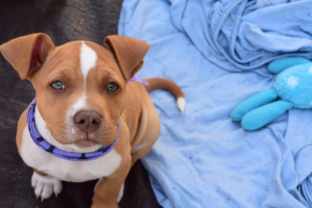 Cute puppy. KathrynHadel.com