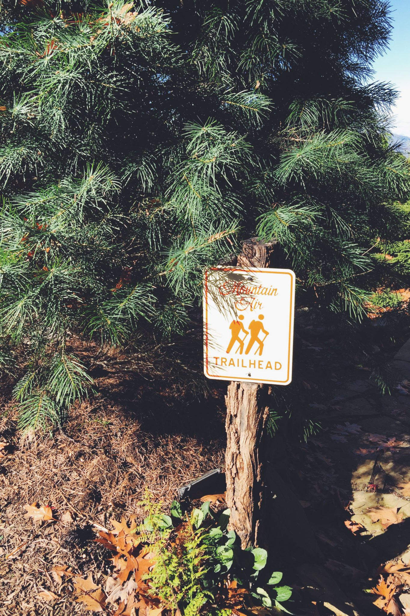 pine tree and hiking sign