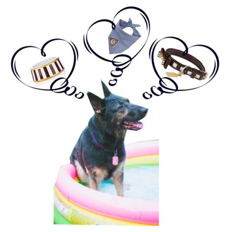 Fashionable Accessories for your Dog