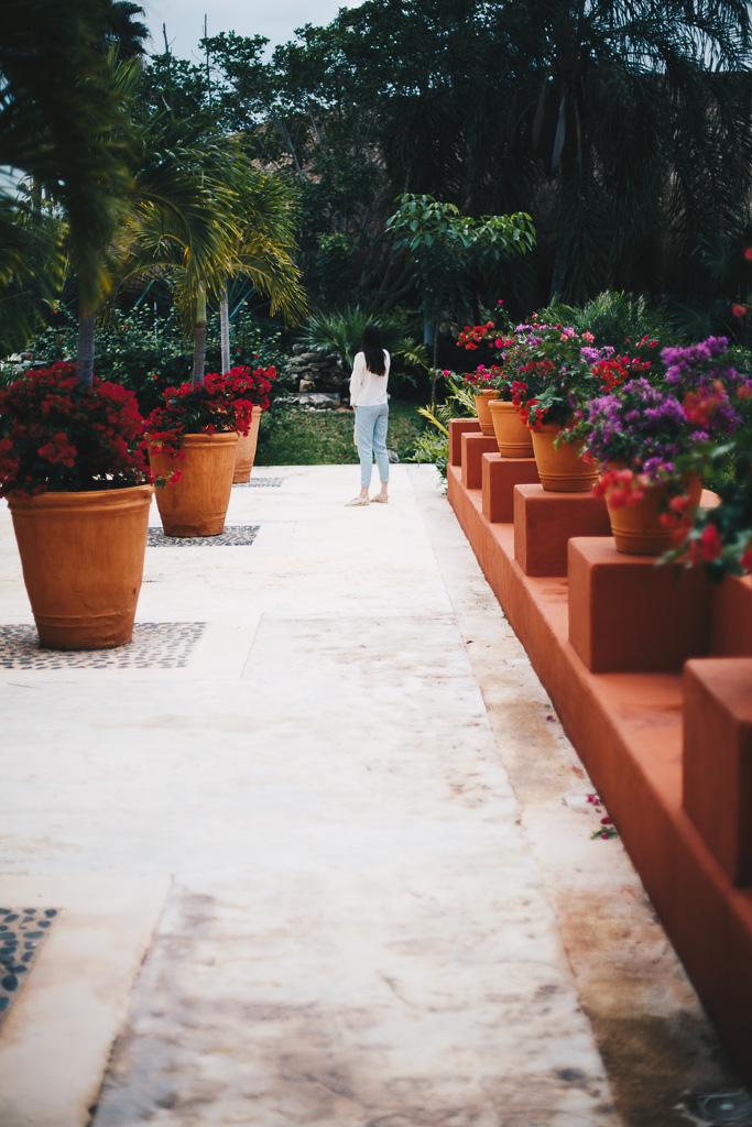 flower pathways in Mexico