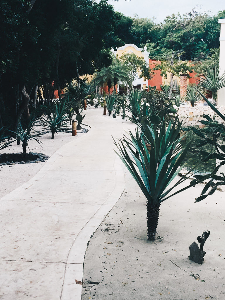 cactus walkway in Mexico