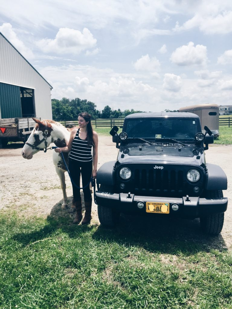 paint horse and a jeep